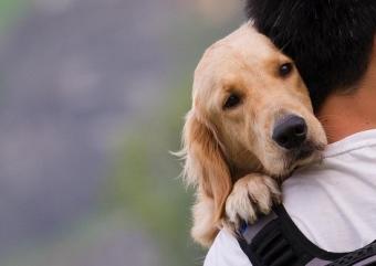 Наказание за жестокое обращение с животными в россии